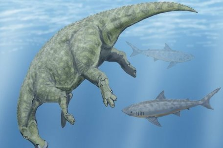 They are a living connection to the dinosaurs