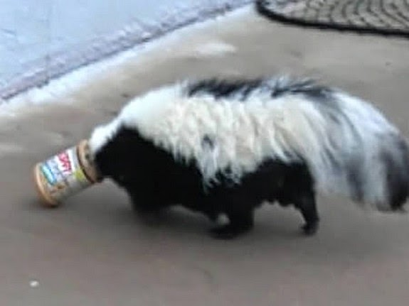 Skunk Got Stuck in a Jar