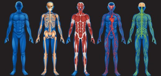 Facts you did not know about your body