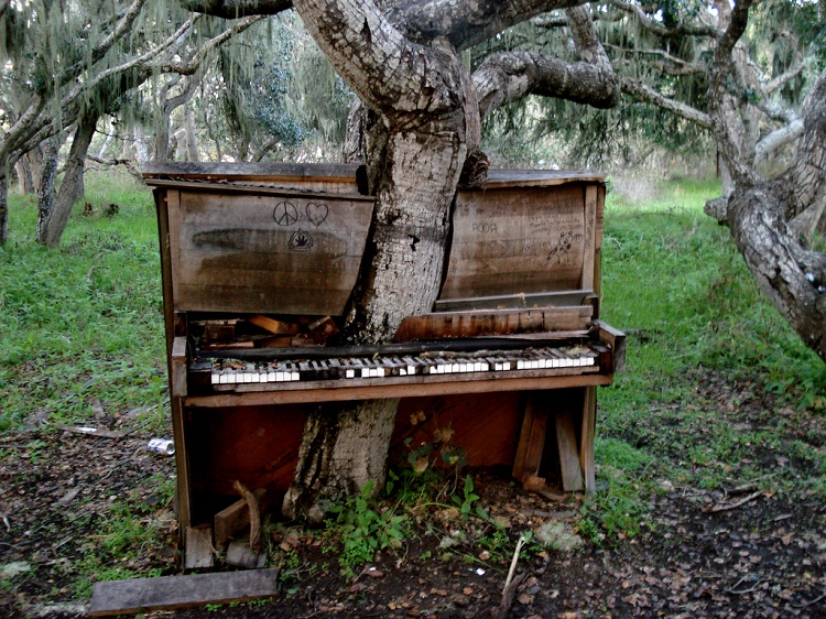 The piano and the tree