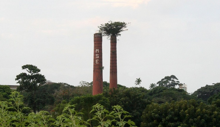 Tree growing through a chimney of an abandoned factory