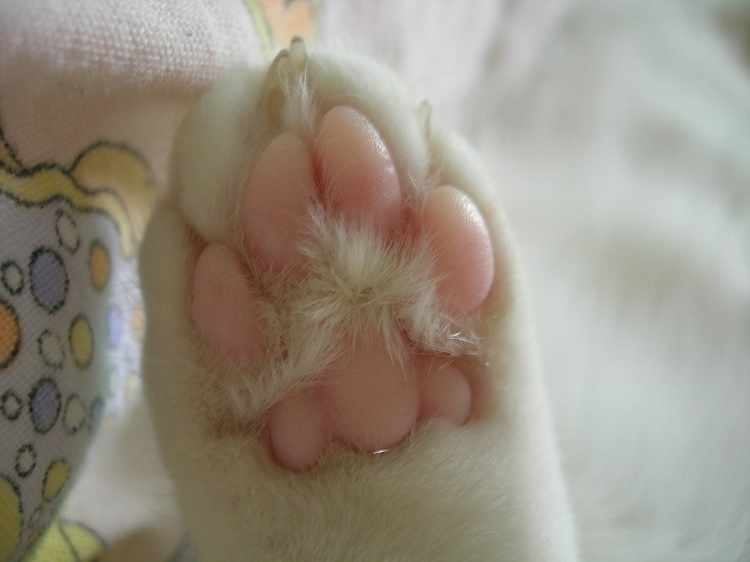 Cats need to exercise their claws and toes provide