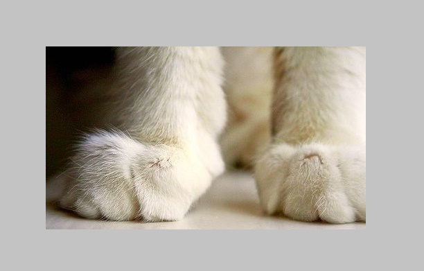 Declawing may lead to litter box problems