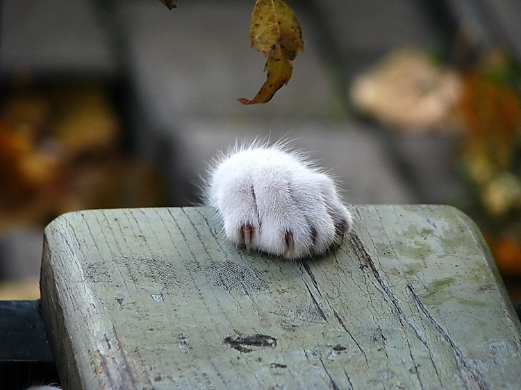 Declawing will not benefit your cat