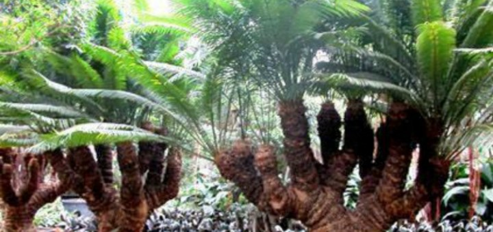 Plant brought back to life after 200 million years - Amazing discovery!