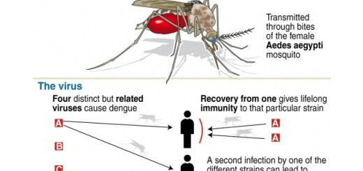 6 Effective and home therapies for dengue fever