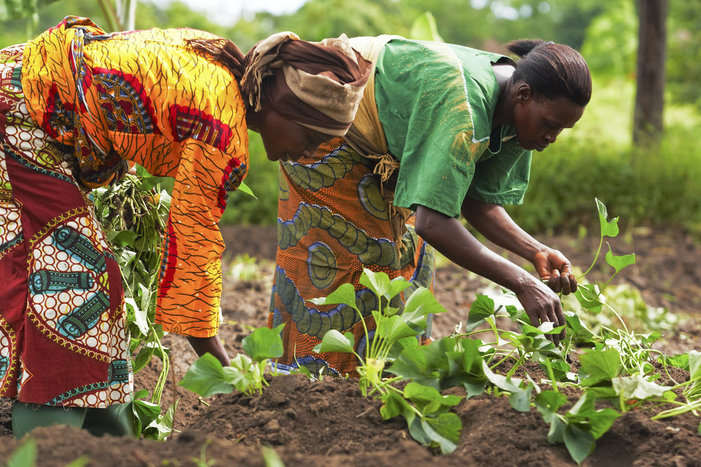 Climate Effects on African Farmers