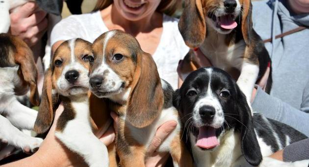 World's first test tube puppies are now 6 months old, all healthy and playful!