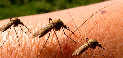 Mosquitoes are a disease causing menace! Yet why can't we wipe them out?