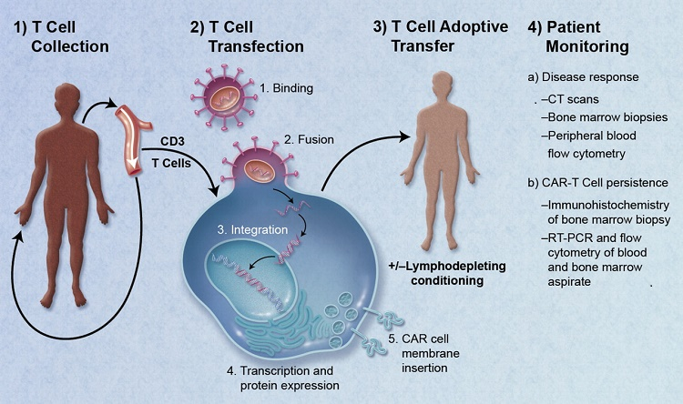 Researchers are highly optimistic at the possibilities of a cellular product