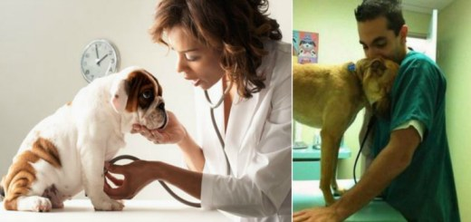 Why the veterinarian is your and your pet's best friend and how often you should go say hello?