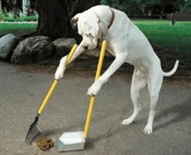 Dog cleaning his own shit
