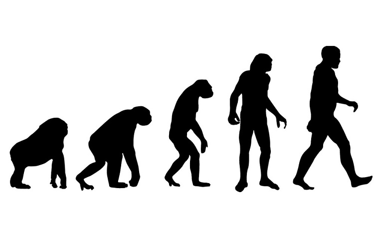 Image result for human evolutionary tree