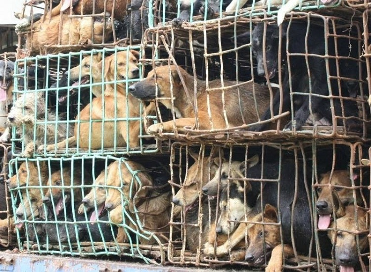 It's A Slap In The Face To Puppy Mills