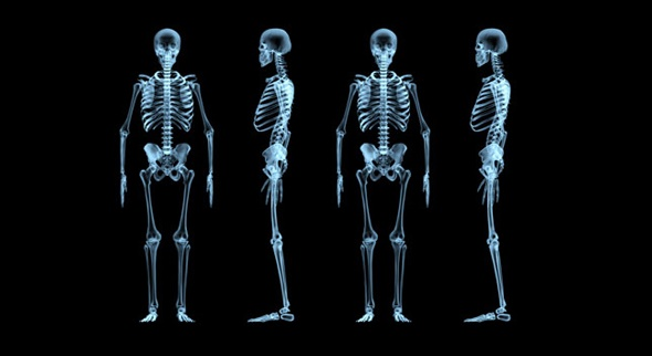 There are 600 skeletal muscles and 206 bones in body