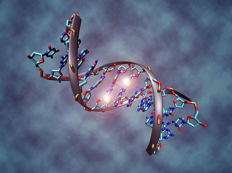 Epigenetic Proves Immunity Response Changes In Human DNA