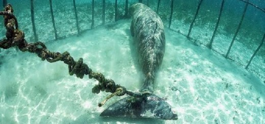 Unbelievable! Divers discover animals trapped in cages deep in the ocean!!