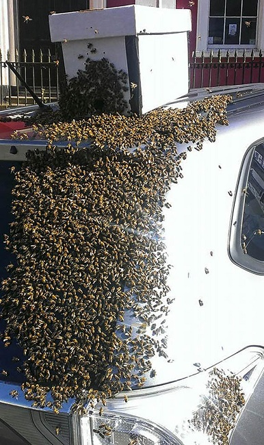 Bees all over the car