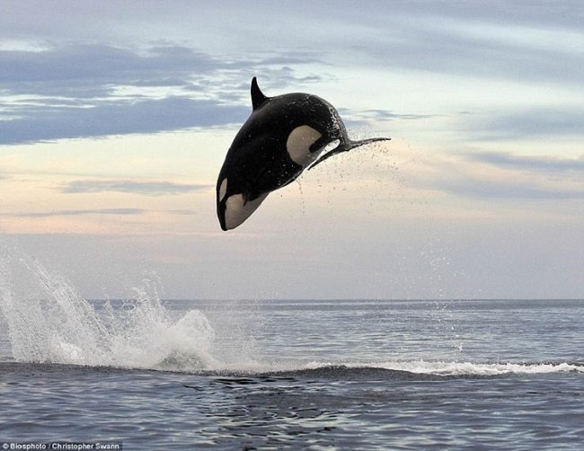 Dances with the Whales