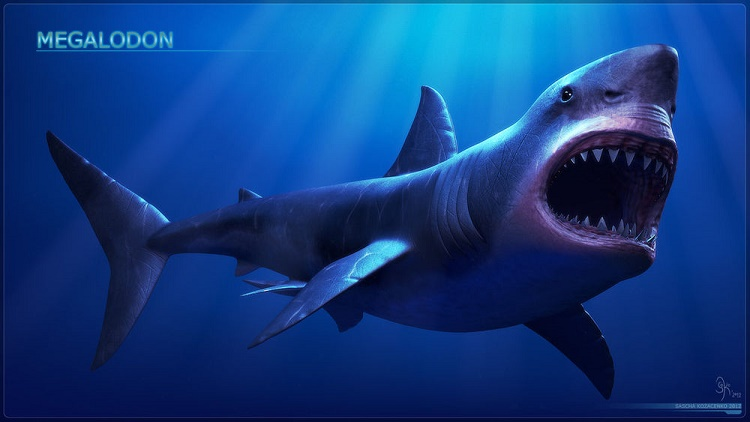 Megalodon Bite Was Powerful
