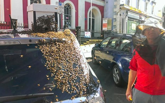Why the Bees Were Swarming the Car