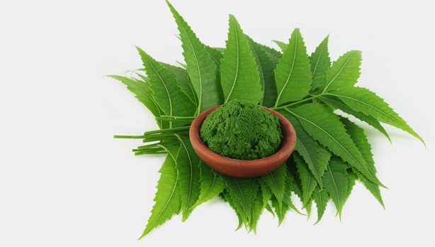 Neem or Indian Lilac to treat boils