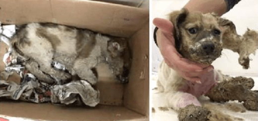 Maniacs torture puppy and drown him in glue till someone comes to the rescue