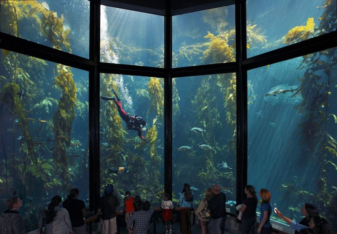 Monterey Bay Aquarium, Monterey, California