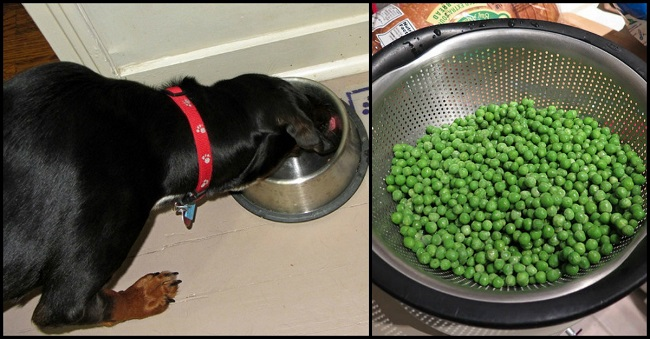10 Human foods for Dogs that are excellent source of nutrients and good for Dog health