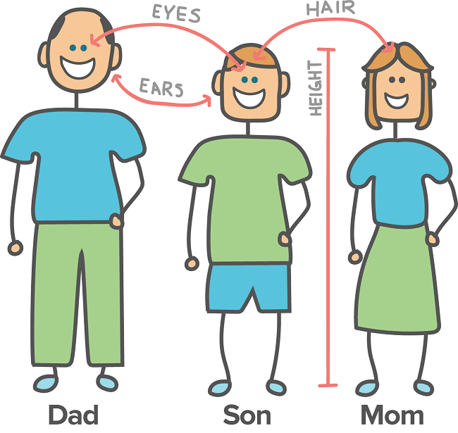 Couples can know Their Baby's likely Eye colour beforehand