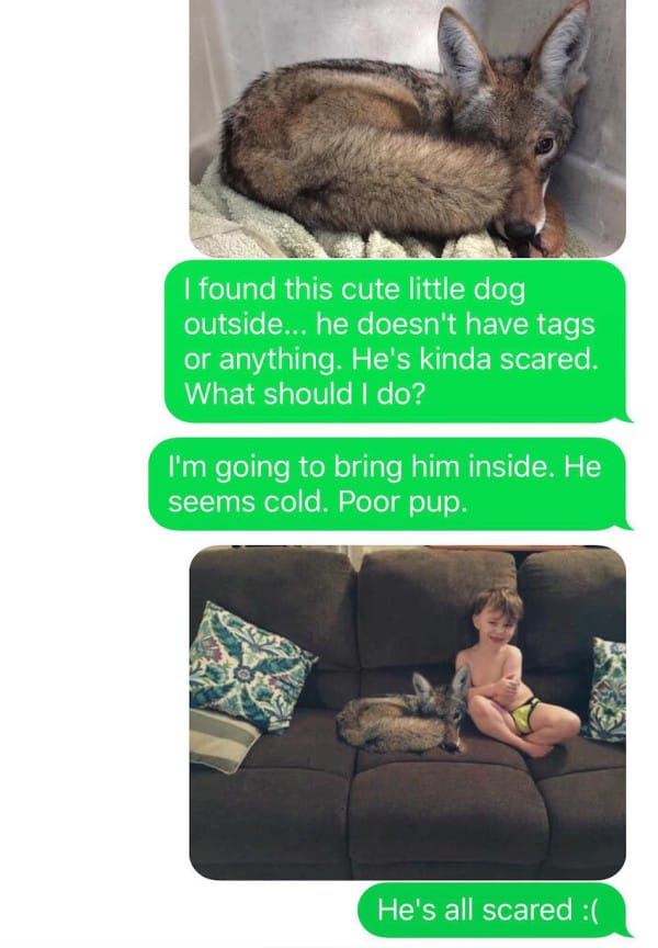 wife texted to husband
