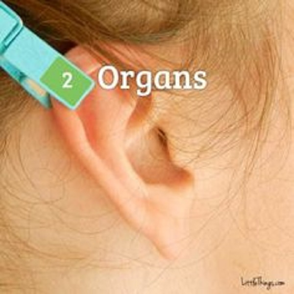Top of Your Ear's Curve