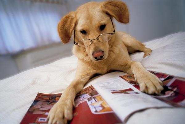 Dogs are actually smart