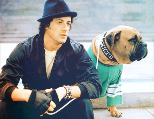 Stallone Bought Back his Dog
