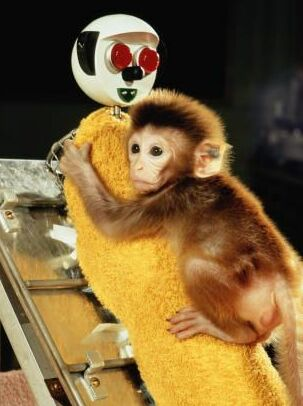 experiment on rhesus monkeys