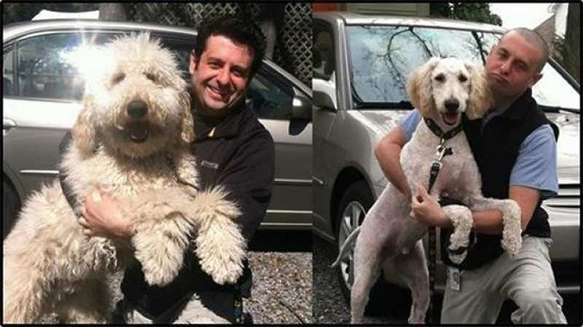 Dog  before and after shaving