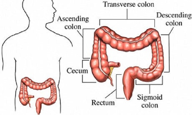 A healthy colon means a healthy body