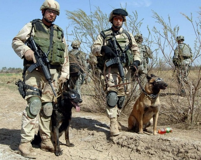 Military dogs1