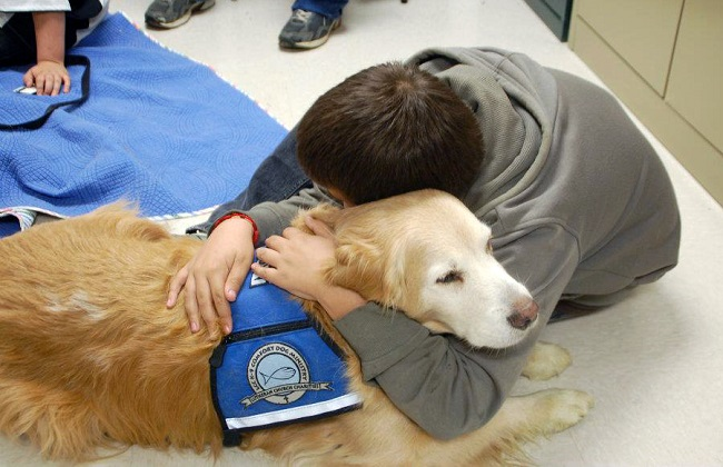Therapy dogs1