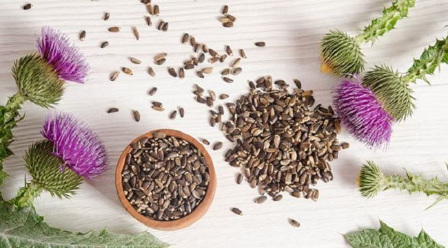 Milk Thistle Helps Fighting Cancer