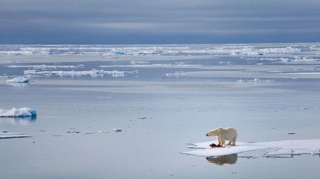 Polar bear extinction