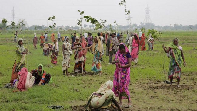 million trees in a day in India