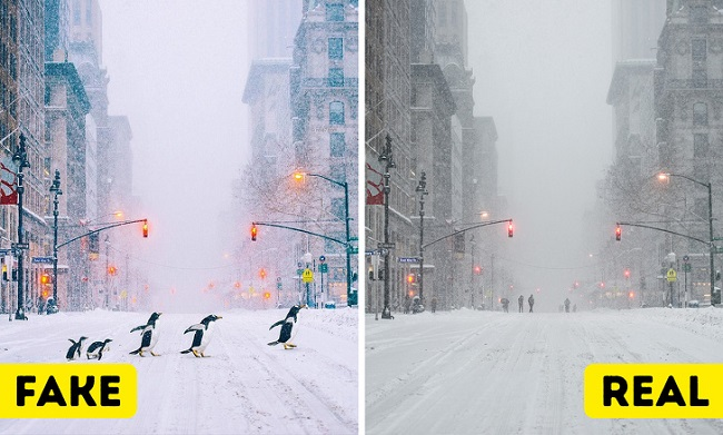 In New York penguins were spotted