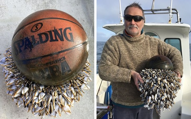 A basketball found in the English Channel