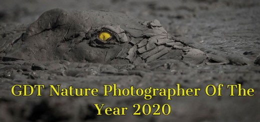 Incredible Winning Photos From The GDT Nature Photographer Of The Year 2020