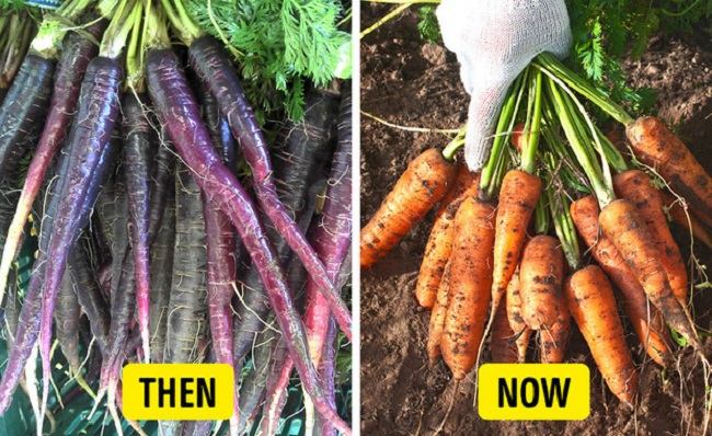 Carrots were turned orange for political reasons