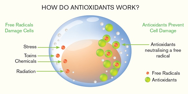 Antioxidant foods reduce oxidative stress