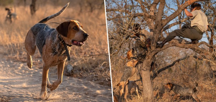 Amazing K9 Dog Squad Trained to Protect Wildlife Save 45 Rhinos from Poachers in South Africa
