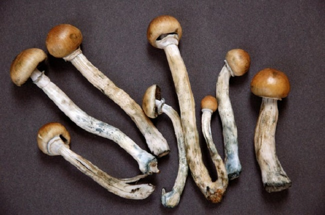 Magic Mushrooms Reduces Anxiety and Depression