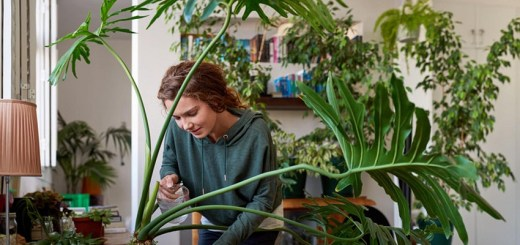 Houseplants You Can Have In Your Home to Improve Your Health and Mood
